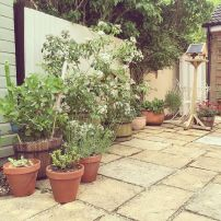 Nancy's seedlings