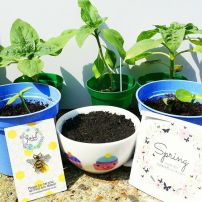 Zabby's seedlings