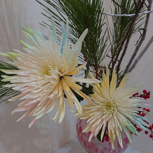 #NewYearFlower for good luck ! #Chrisantium (Anastasia), #Pine #heavenlybamboo #お正月花アレンジ です#菊(アナスタシア) #松 #南天の実佳い年となりますように。
