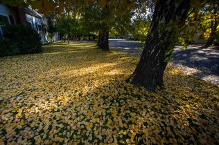 leaves laying 2