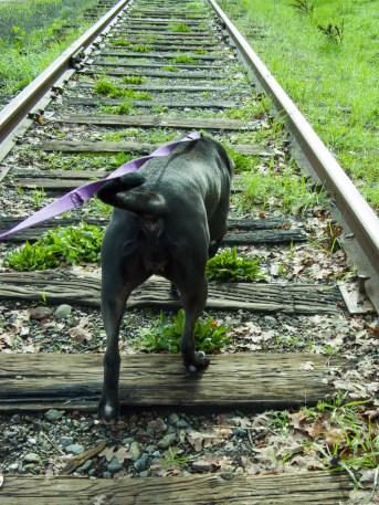 along the tracks 2