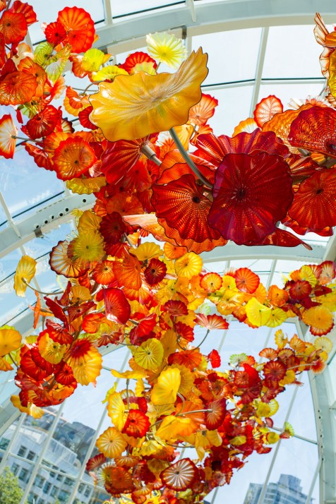 d chihuly 6