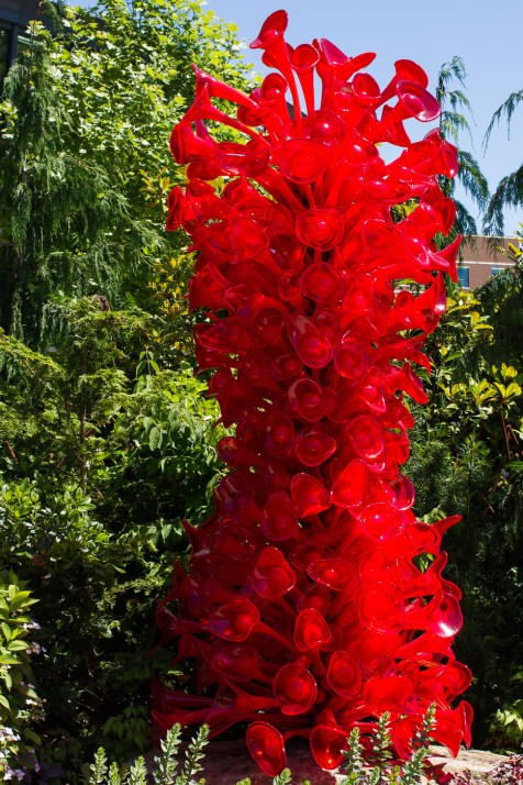 d chihuly 5