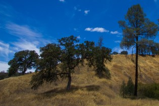 dry, undisturbed hillside