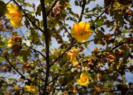 exquisite bloom
