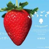 平成最後の秋に!佐賀県から7年越しの「いちごさん」誕生