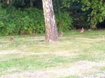 There were a ton of baby bunnies in the park - SO cute. // Im Park sind ganz viele Babyhasen rumgehoppelt - super süß.