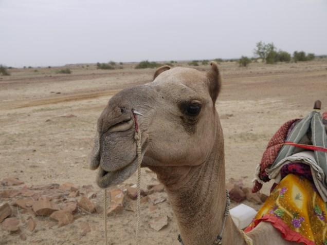 13-08-12_jaisalmer_camelsafari_fort (22)