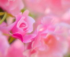 こころを癒やすピンクの花