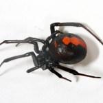 【知っておきたい】毒グモやヒアリ 対策はどのようにすればよい?