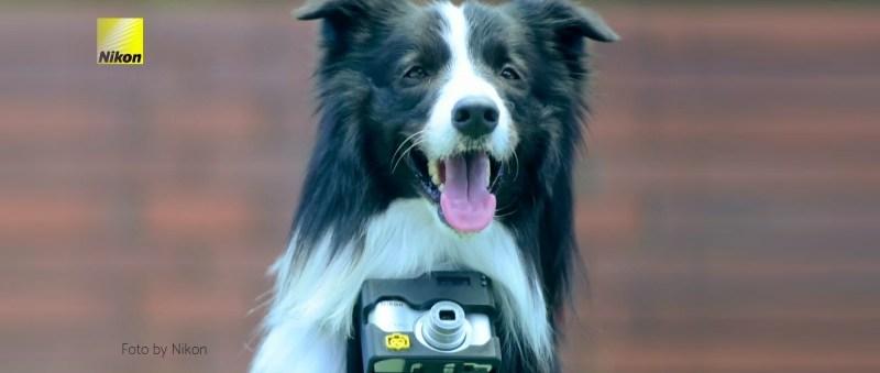 Nikon crea una cámara para perros que toma fotos cuando tu mascota se emociona