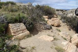 over 100 million year old petrified tree trunks