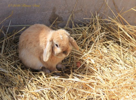 6070 red acre sd16 bunny