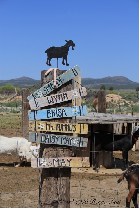 6155 red acre sd16 goats sign