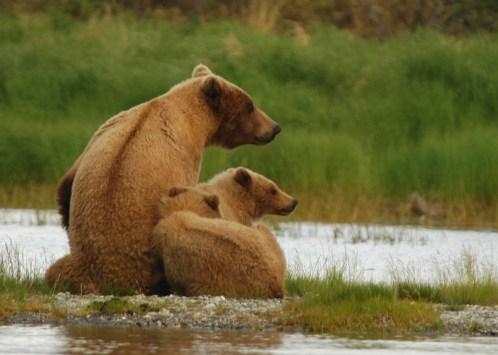 bears-2035489_1920-1