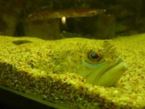 Combien de poissons voyez-vous sur cette image...?