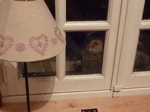 Le chat guette !