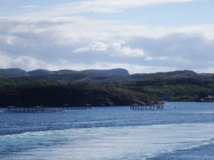 Moins sympa, l'élevage de saumon industriel