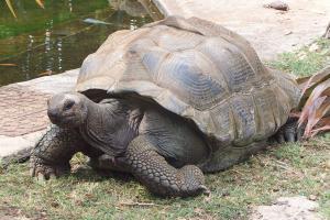 Il y aussi quelques tortues terrestres abandonnées qui ont été récupérées ici...