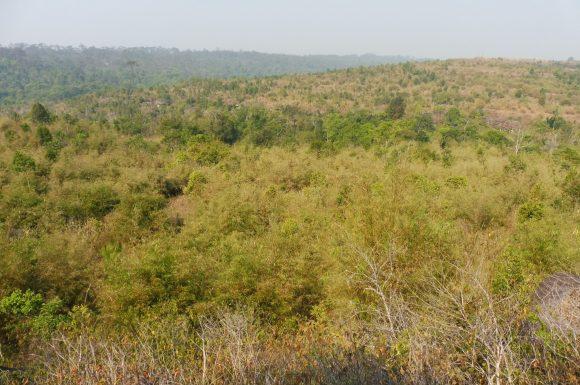 Dans la jungle terrible jungle...