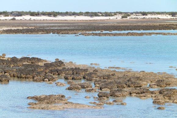 Hamelin Pool et ses stromatolithes