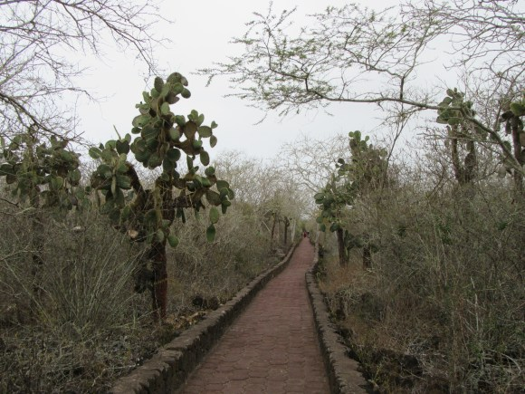 Le chemin vers Tortuga Bay