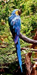 Heavenly parrot blue ...