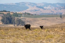 Charming Tolay Lake - Sonoma County | Smiling in Sonoma