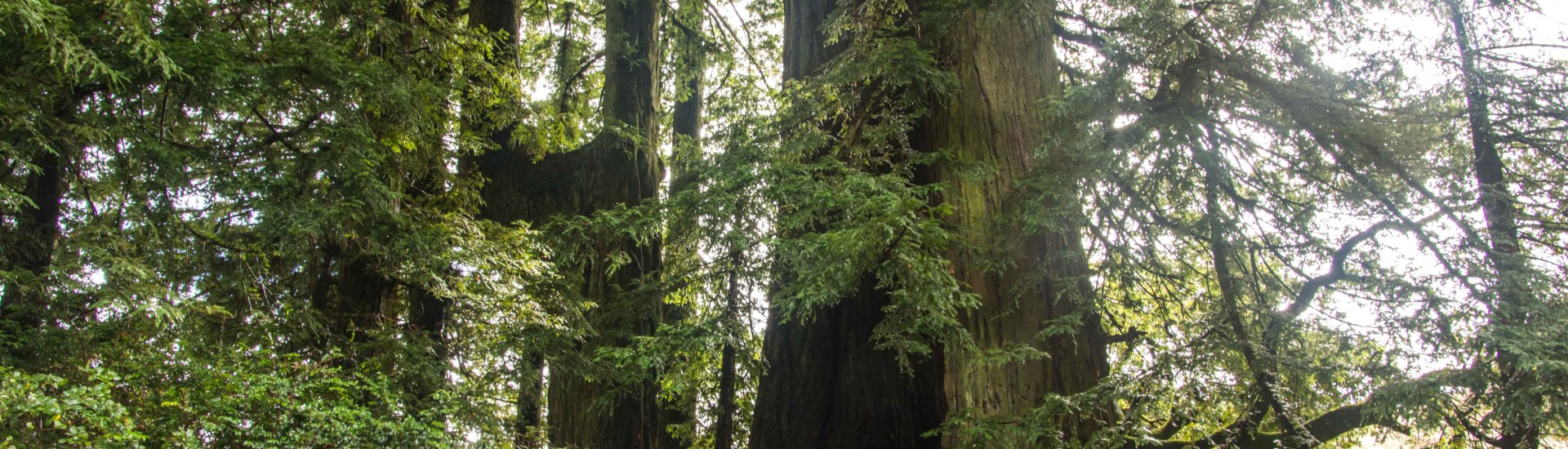 A Magical Hike - Indian Tree Open Space Preserve | Smiling in Sonoma