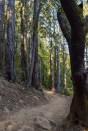 Annadel State Park | Smiling In Sonoma