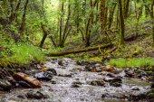 Gilliam Creek - Austin Creek State Recreation | Smiling in Sonoma