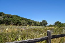 China Camp State Park | Smiling in Sonoma