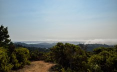 Pantoll to East Peak Mt Tam | Smiling in Sonoma