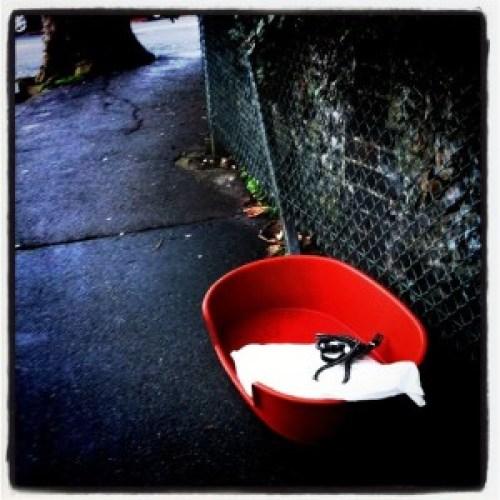 Dog_basket