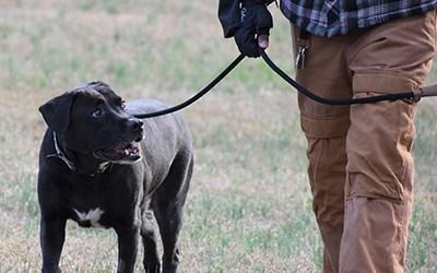 Dog Training in East Metro Atlanta Area Dekalb County, Decatur, Stone Mountain