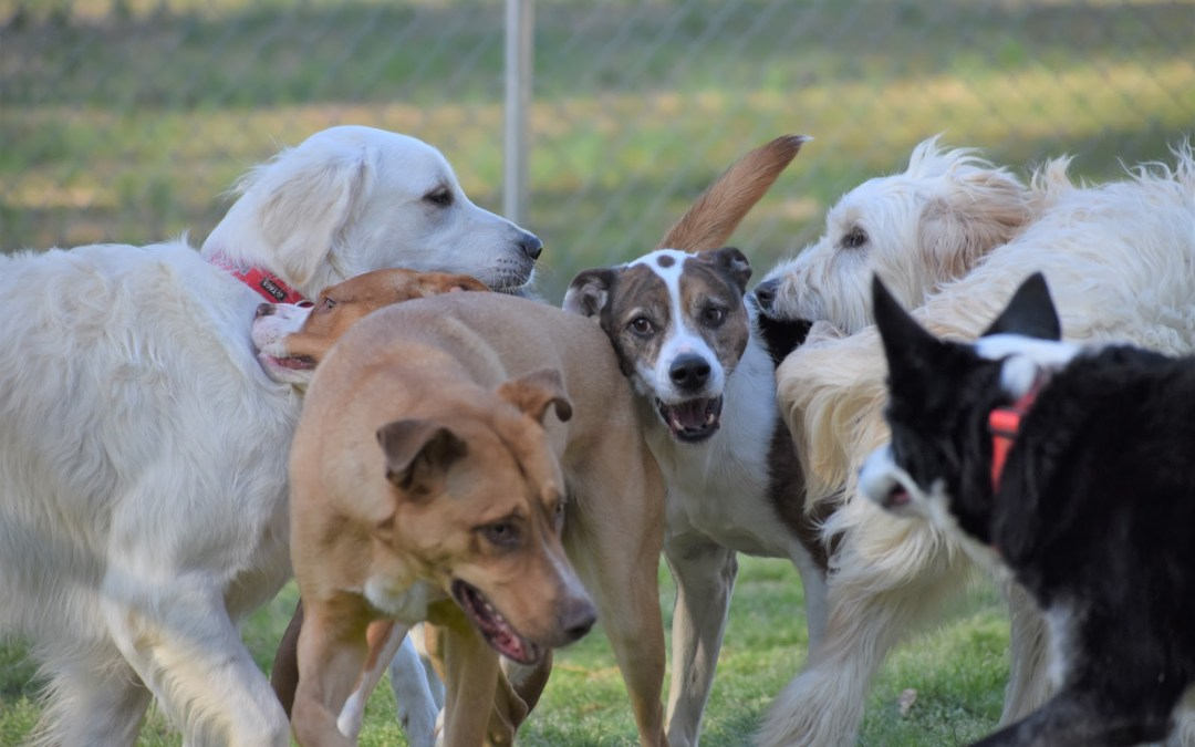 Dogs huddle and play together in the grass at Smith Farms Kennel, the best dog boarding in Metro Atlanta