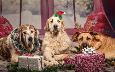 Holiday Fun with Your Dog