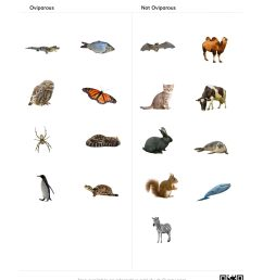 Animal Classification Worksheet Writing   Printable Worksheets and  Activities for Teachers [ 2560 x 1978 Pixel ]