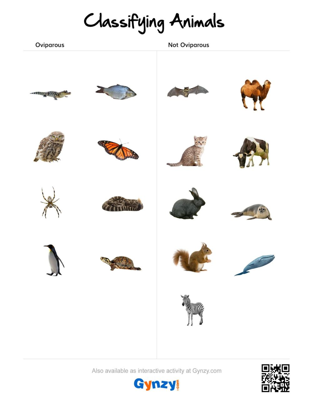 medium resolution of Animal Classification Worksheet Writing   Printable Worksheets and  Activities for Teachers