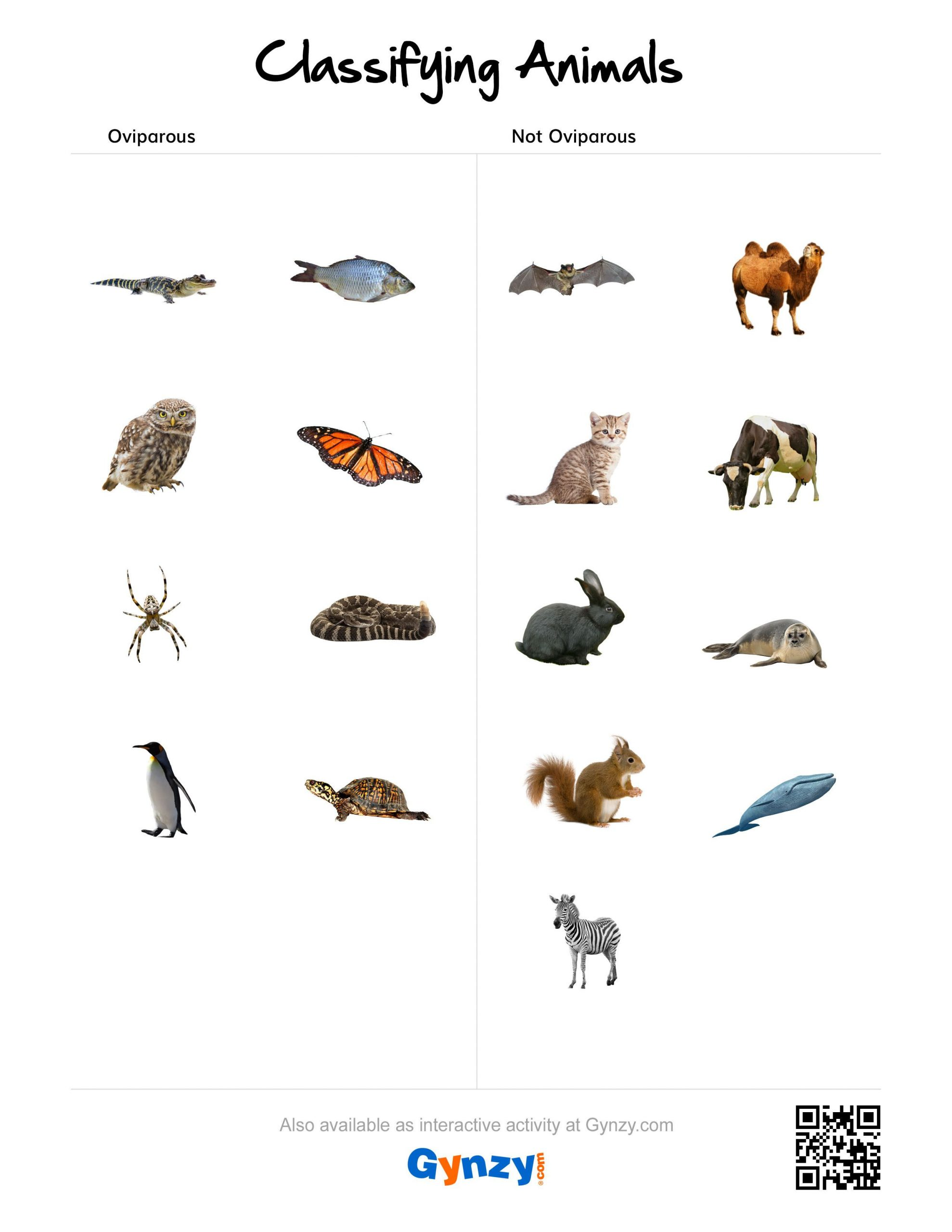 hight resolution of Animal Classification Worksheet Writing   Printable Worksheets and  Activities for Teachers