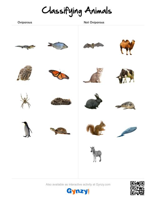 small resolution of Animal Classification Worksheet Writing   Printable Worksheets and  Activities for Teachers