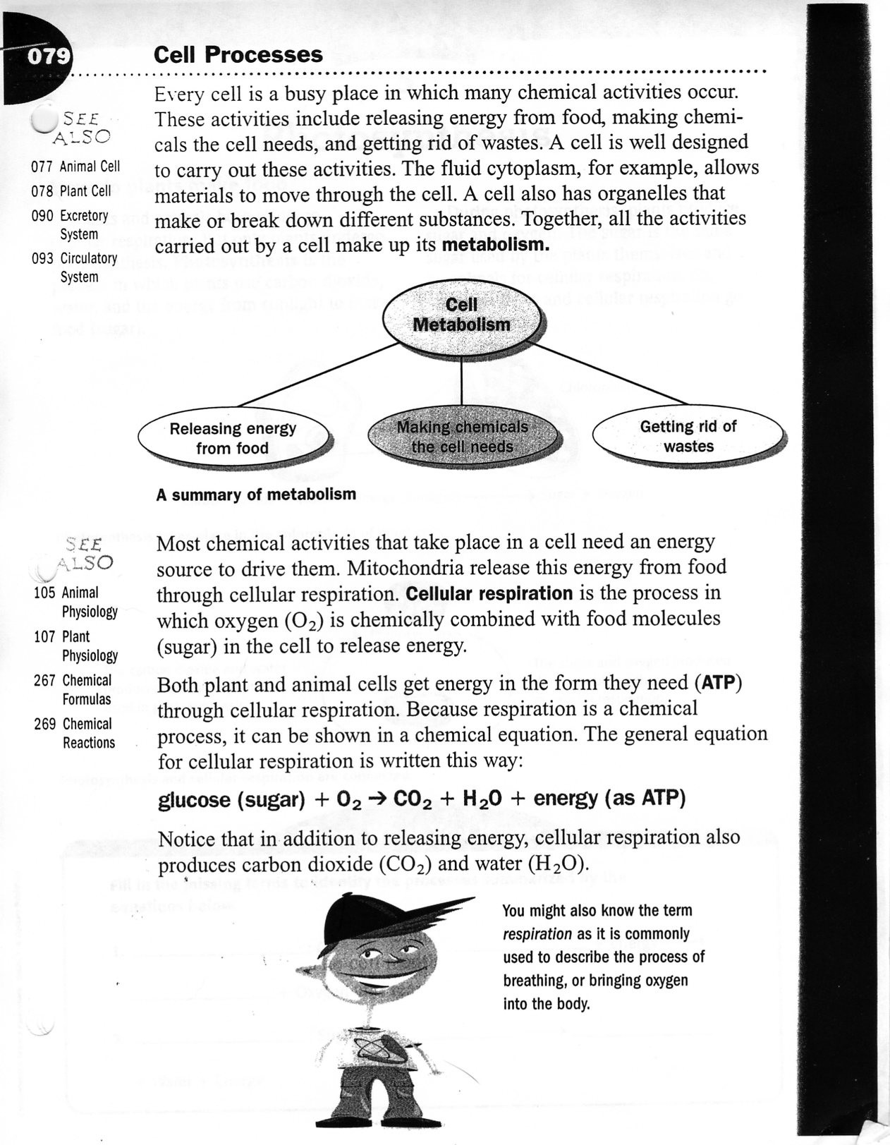 30 Bill Nye Respiration Worksheet