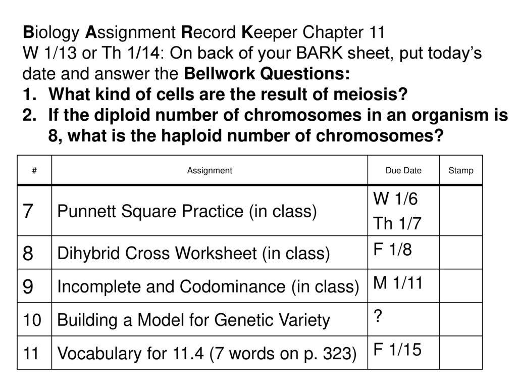 30 Dihybrid Cross Worksheet Answers