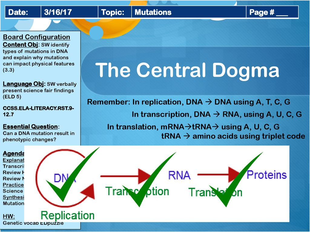30 Dna Mutations Practice Worksheet