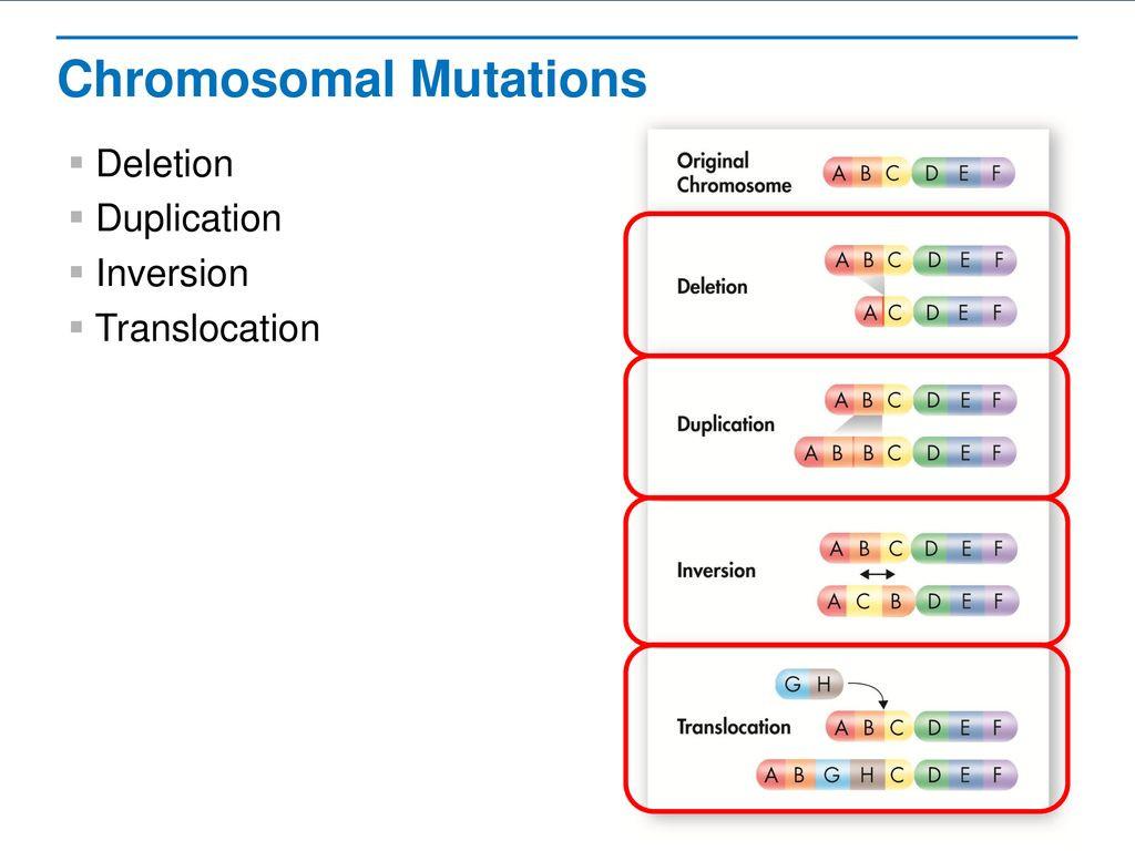 30 Genetic Mutations Worksheet Answer Key