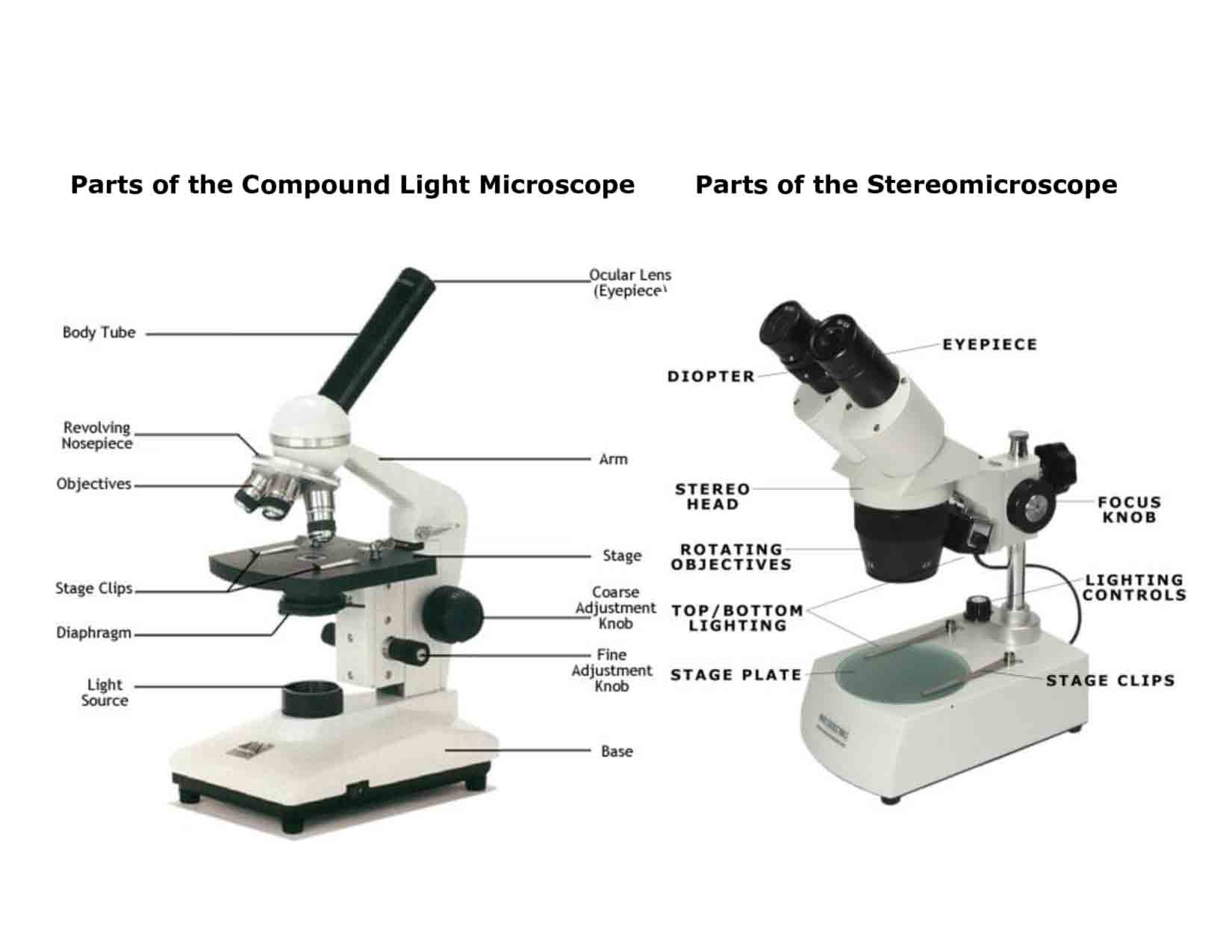 30 Microscope Parts And Use Worksheet