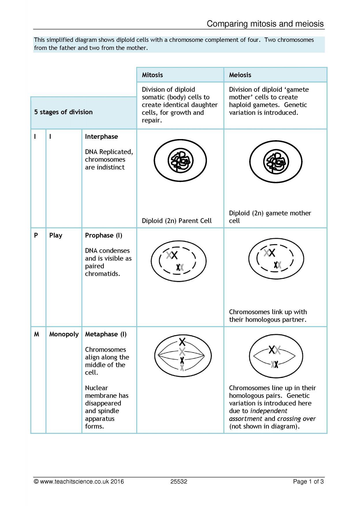 30 Mitosis Vs Meiosis Worksheet Answers
