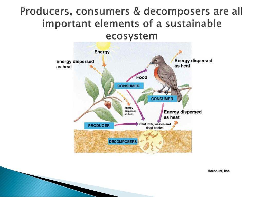 30 Producer Consumer Decomposer Worksheet