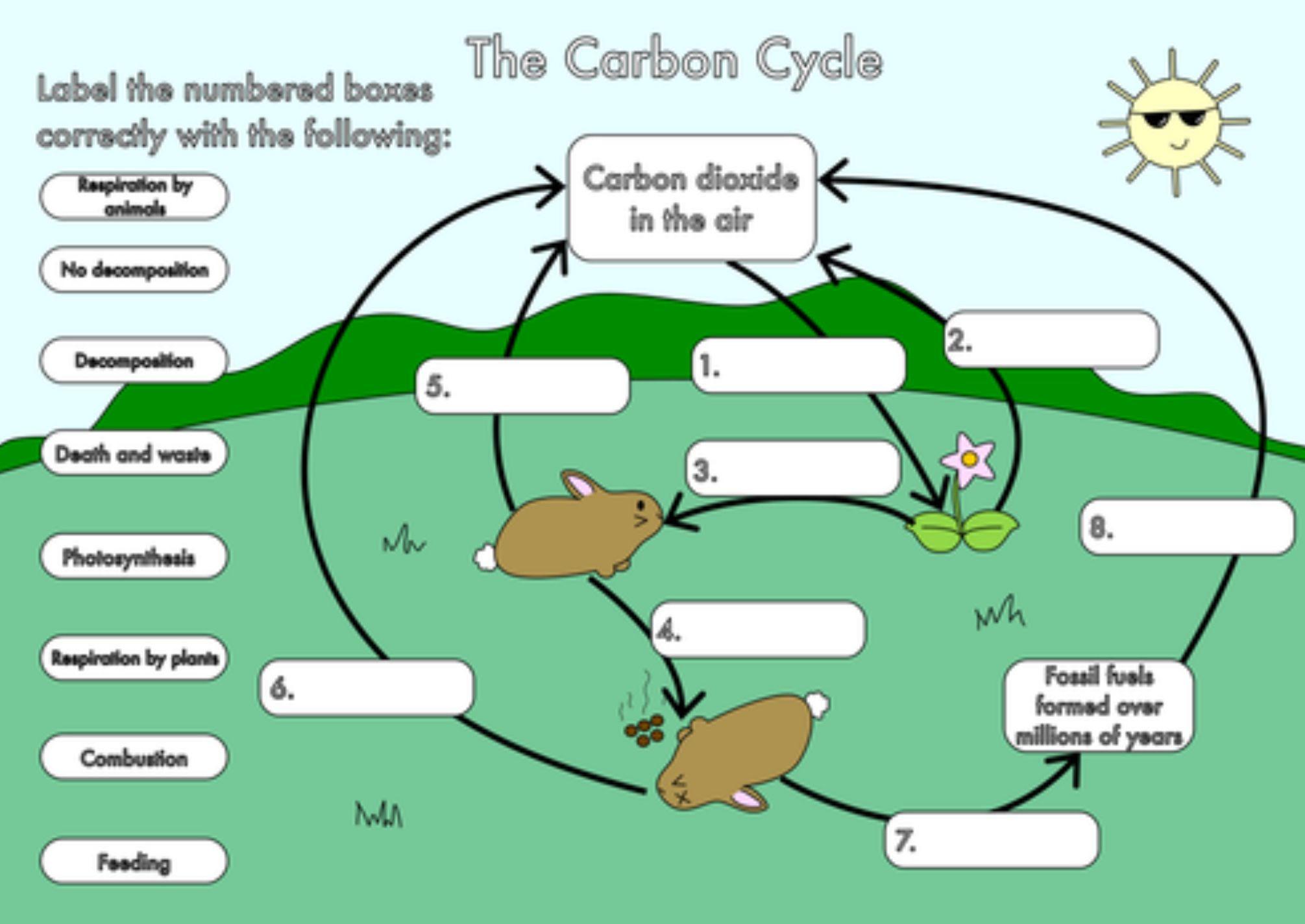 30 Biogeochemical Cycles Worksheet Answers