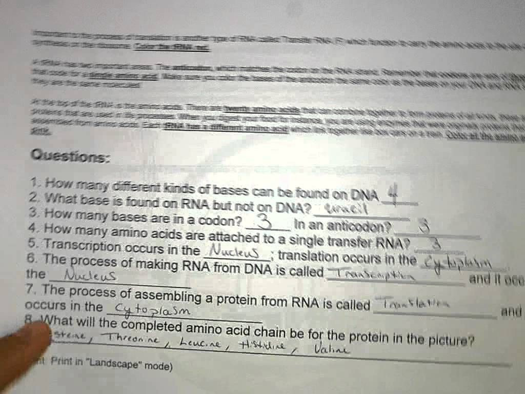 30 Dna Transcription And Translation Worksheet